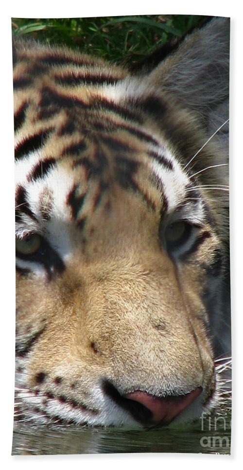 Patzer Bath Towel featuring the photograph Tiger Water by Greg Patzer