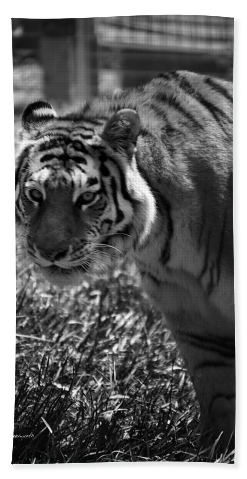 Animals Bath Sheet featuring the photograph Tiger With A Cold Stare by Thomas Woolworth