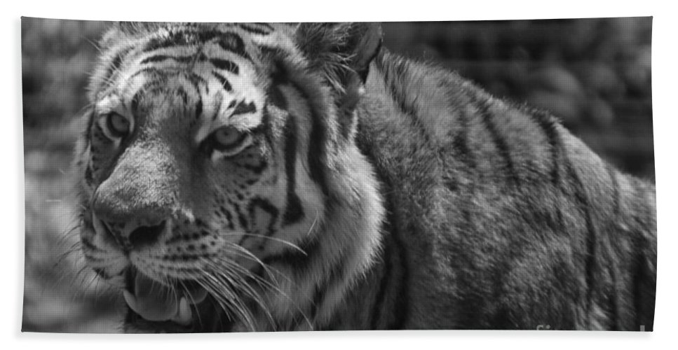 Animals Bath Sheet featuring the photograph Tiger With A Hard Stare by Thomas Woolworth