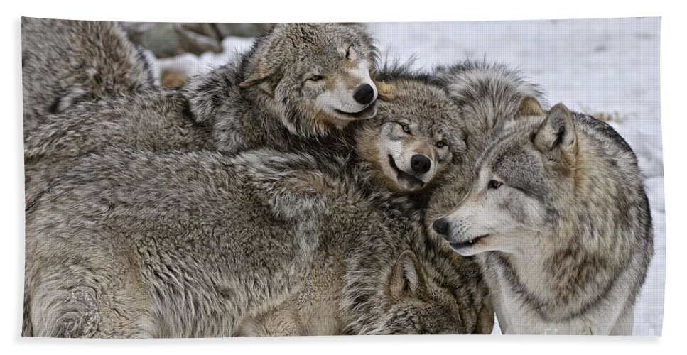 Timber Wolf Hand Towel featuring the photograph Timber Wolf Pictures 120 by World Wildlife Photography