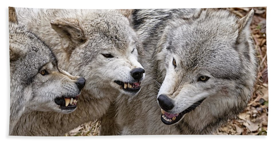 Timber Wolf Hand Towel featuring the photograph Timber Wolf Pictures 213 by World Wildlife Photography