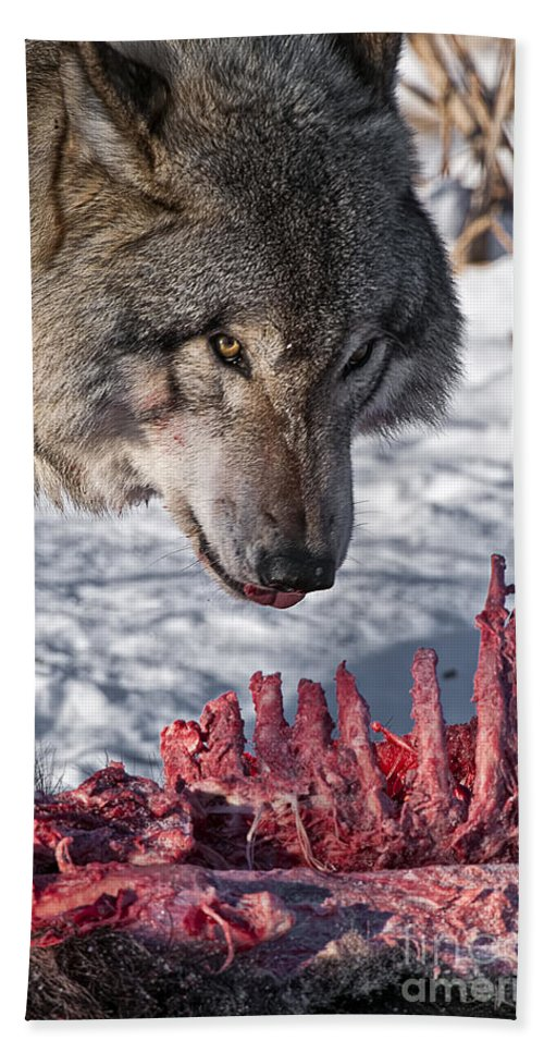 Timber Wolf Hand Towel featuring the photograph Timber Wolf Pictures 552 by World Wildlife Photography