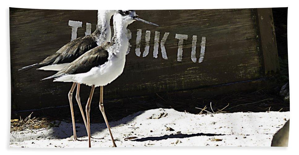 Birds Hand Towel featuring the photograph Timbuktu Two by Ken Frischkorn