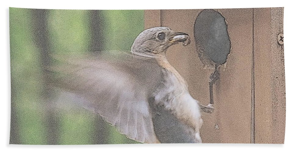 Eastern Bluebird Bath Sheet featuring the photograph Time For Dinner by Mim White