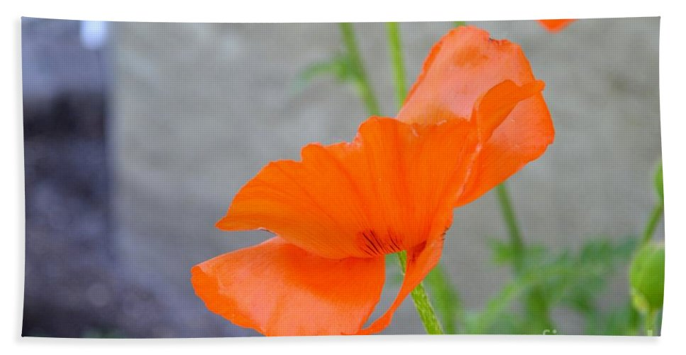 Poppies Flower Garden Red Nature Hand Towel featuring the photograph Time To Fly by Galina Khlupina