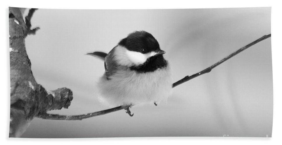 Bird Bath Sheet featuring the photograph Tiny Branch With Guest by Deborah Benoit