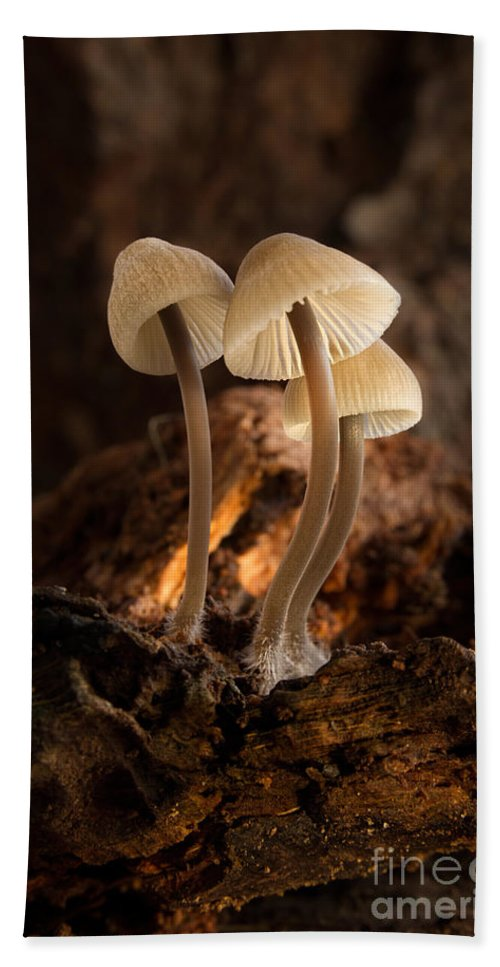 Tiny Toadstools Hand Towel featuring the photograph Tiny Toadstools by Ann Garrett