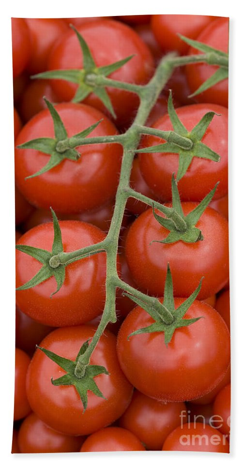 Tomato Hand Towel featuring the photograph Tomato On The Vine by Lee Avison