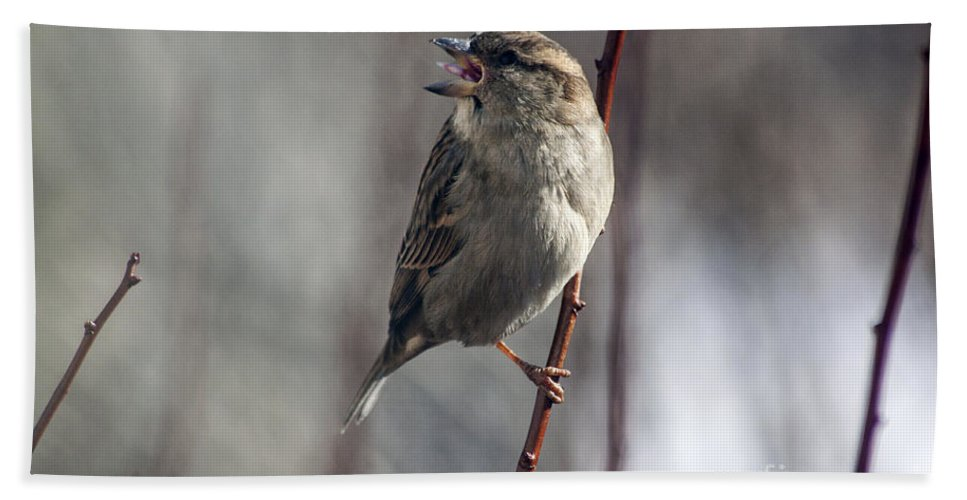 Sparrow Hand Towel featuring the photograph Tongue Of The Sparrow by Janice Pariza