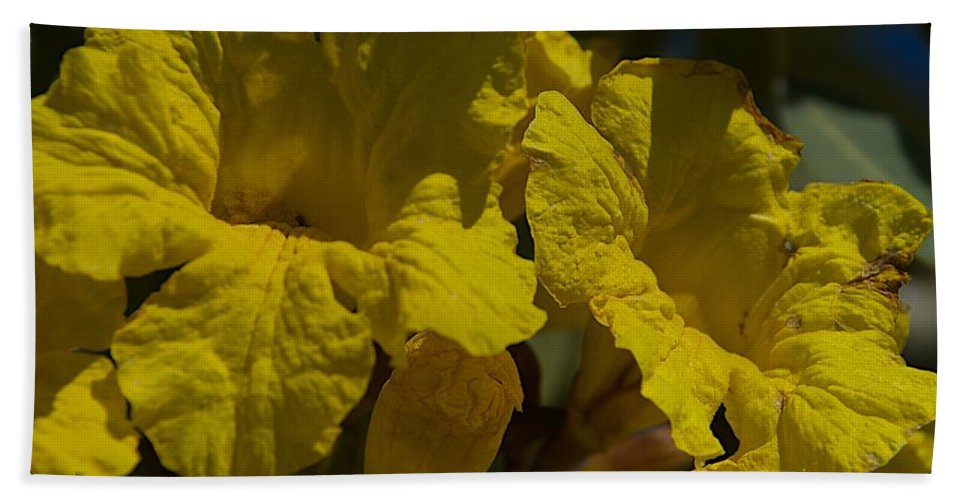 Blossoms Bath Sheet featuring the photograph Too Late by Joseph Yarbrough