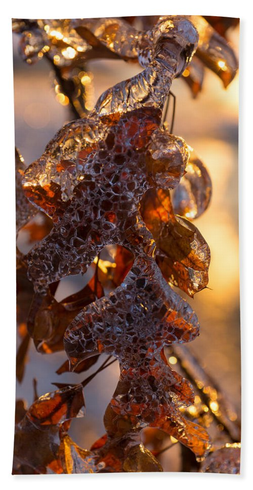 Toronto Ice Storm 2013 Hand Towel featuring the photograph Toronto Ice Storm 2013 - Oak Leaves Jewelry by Georgia Mizuleva