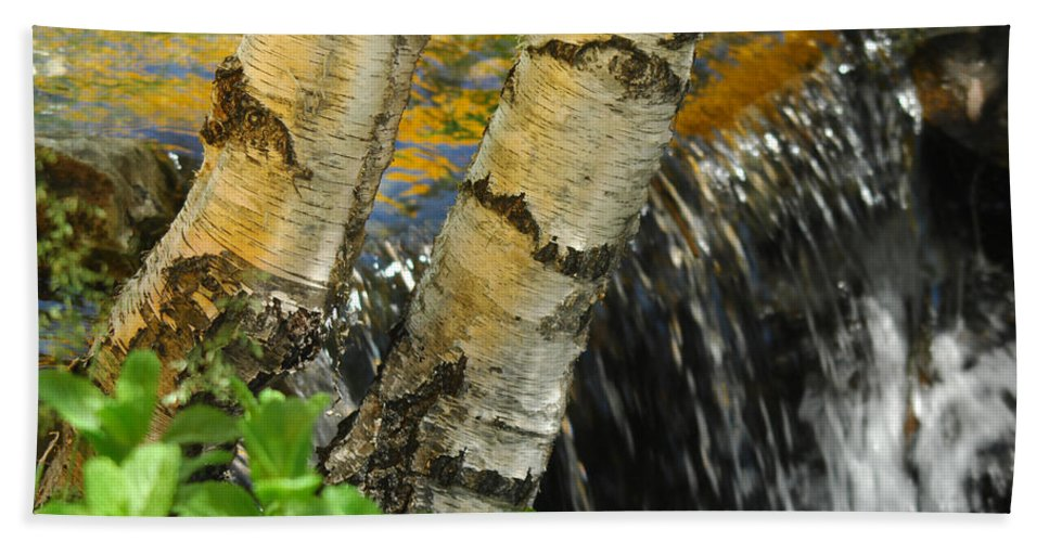 Birch Trees Bath Sheet featuring the photograph Totally Birching by Donna Blackhall