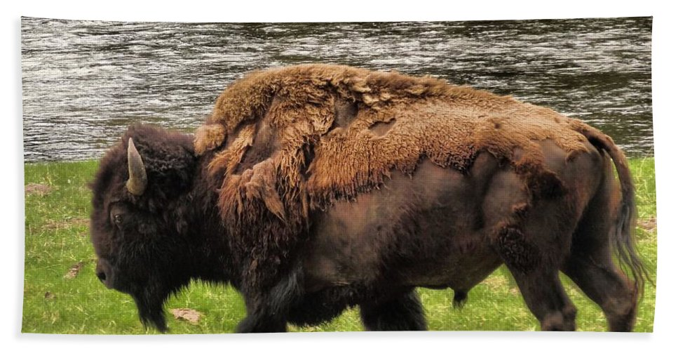 Bison Hand Towel featuring the photograph Tough by Dan Sproul