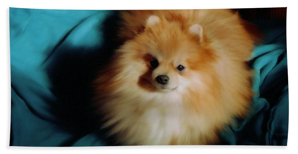 Pomeranian Hand Towel featuring the painting Touley by Shere Crossman