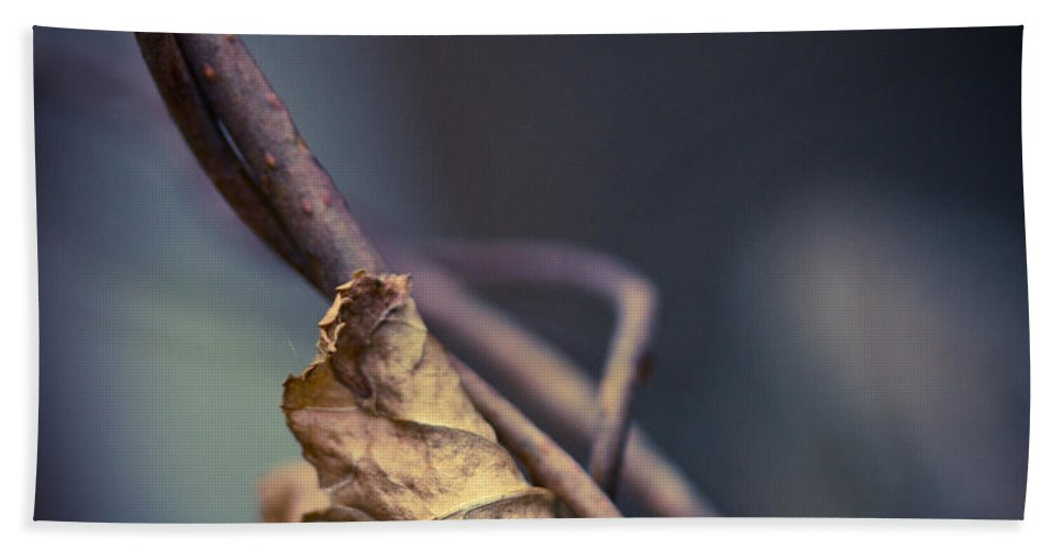 Leaf Hand Towel featuring the photograph Trapped by Shane Holsclaw