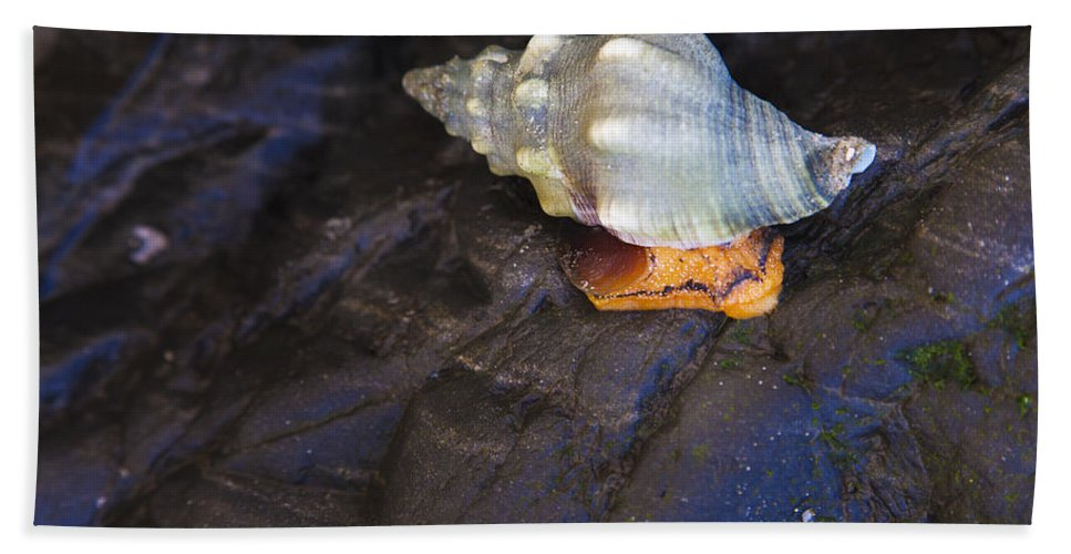 Traveling At A Snails Pace Hand Towel featuring the photograph Traveling At A Snail's Pace by David Millenheft