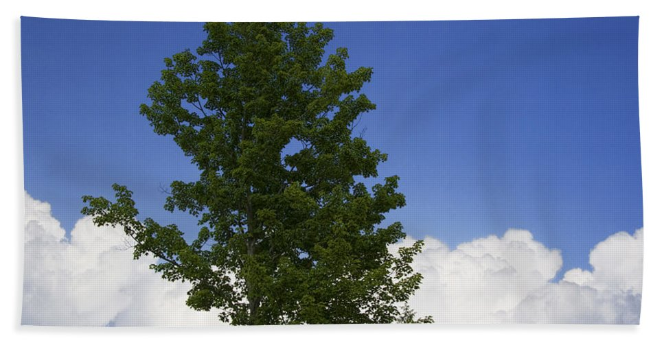 Art Bath Sheet featuring the photograph Tree Against A Cloudy Blue Sky In Vermont by Randall Nyhof