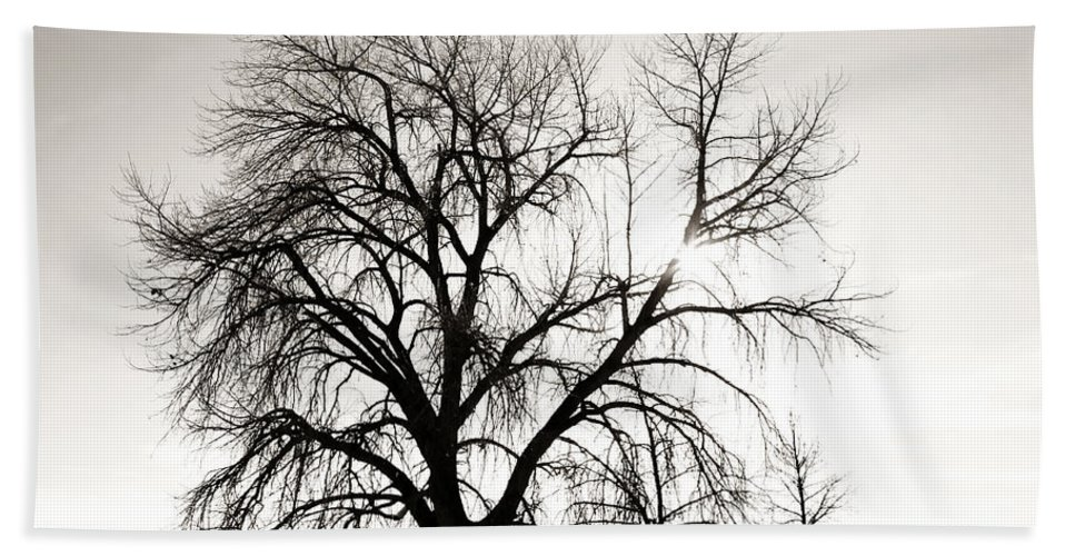 Tree Hand Towel featuring the photograph Tree at Harpers Lake Louisville 2 by Marilyn Hunt
