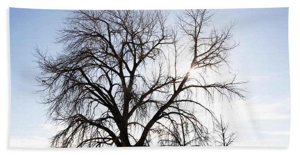 Tree Bath Sheet featuring the photograph Tree at Harpers Lake Louisville by Marilyn Hunt