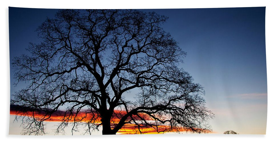 Tree Hand Towel featuring the photograph Tree At Sunrise by Robert Woodward