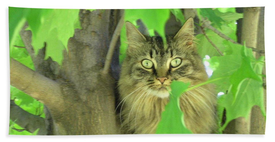 Maine Coon Hand Towel featuring the photograph Tree Climber by Marisa Horn