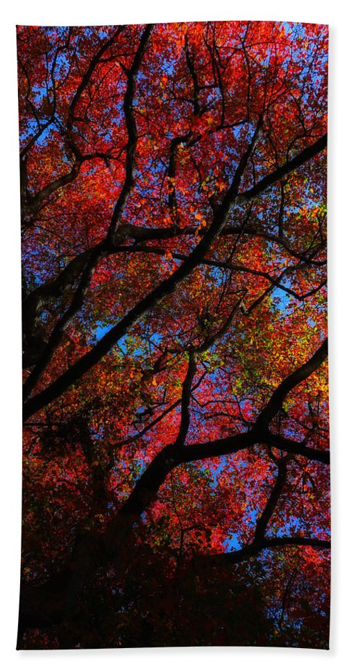 Tree Hand Towel featuring the photograph Tree Color Blast by Joseph Hedaya