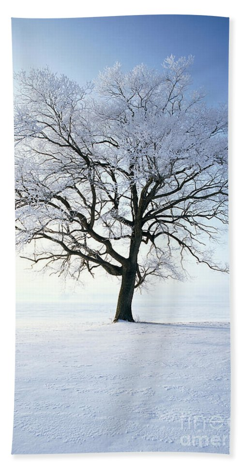 Plant Bath Sheet featuring the photograph Tree Covered In Hoar Frost by David Davis