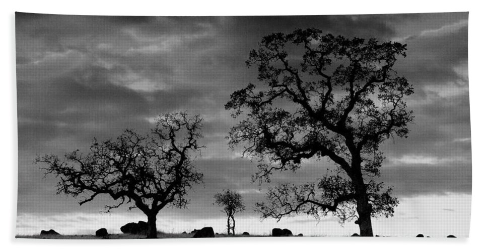 Oak Bath Sheet featuring the photograph Tree Family In Black And White by Robert Woodward