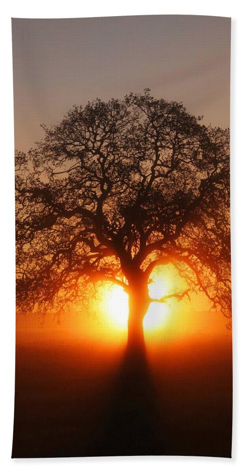 Tree Bath Sheet featuring the photograph Tree Fog Sunrise by Robert Woodward