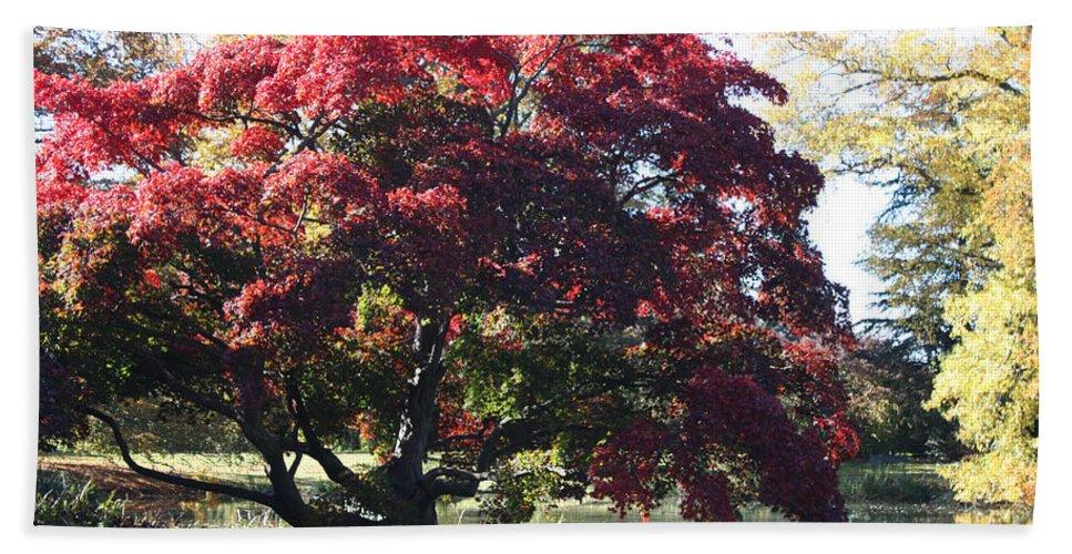 Tree Hanging Into Lake Bath Sheet featuring the photograph Tree Hanging Into Lake by John Telfer