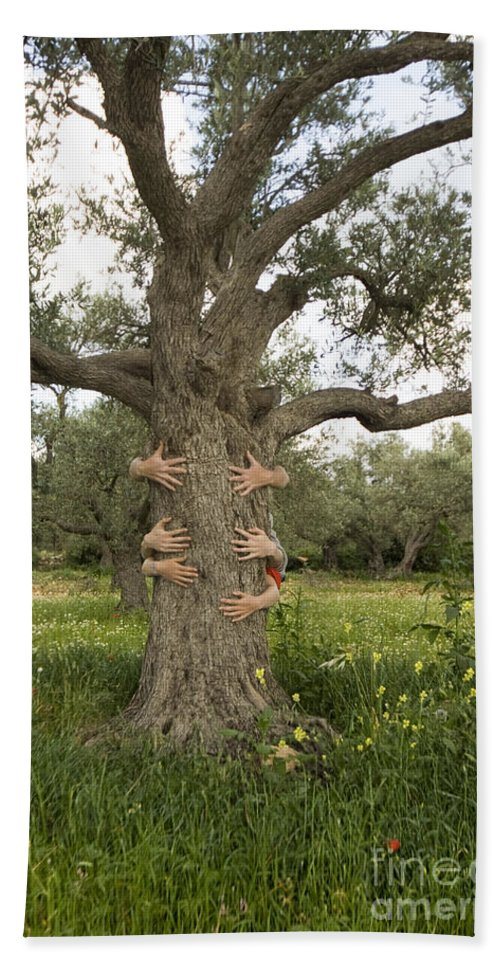 Tree Hand Towel featuring the photograph Tree Hugging Green Ecological Concept by Eyal Bartov