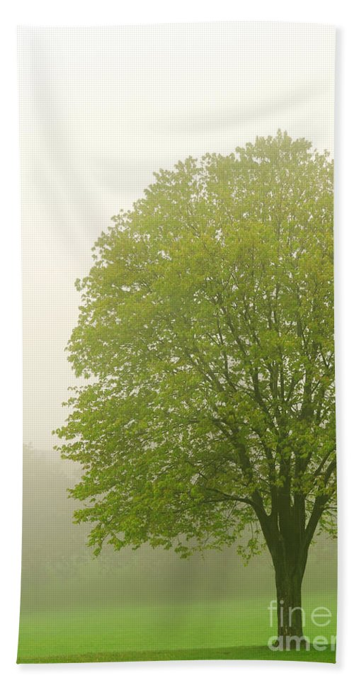 Fog Hand Towel featuring the photograph Tree In Fog by Elena Elisseeva