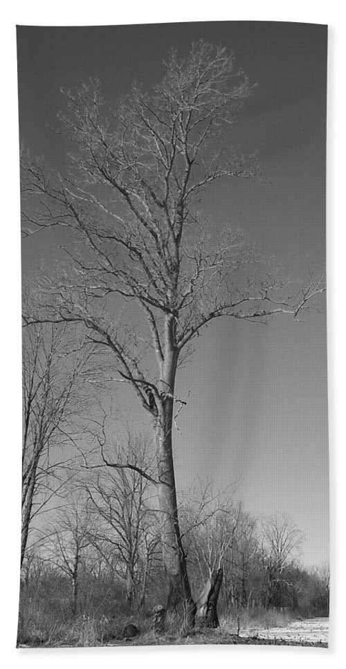 Tree Hand Towel featuring the photograph Tree In Winter by Michelle Miron-Rebbe