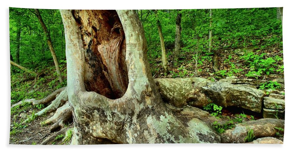 Spring Mill State Park Bath Sheet featuring the photograph Tree Mouth by Adam Jewell