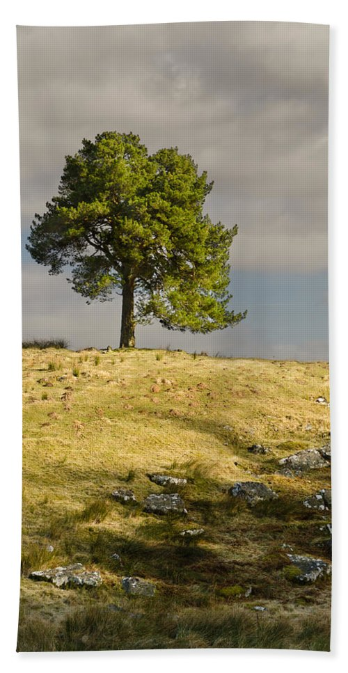 Countryside Bath Sheet featuring the photograph Tree On A Hill Vertical by David Head