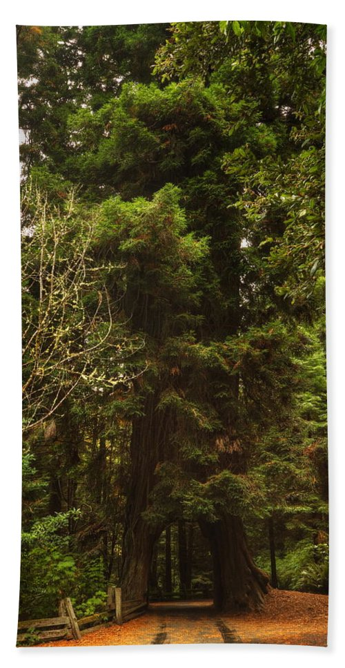 Redwood Bath Sheet featuring the photograph Tree Redwood Ca 6 by John Brueske