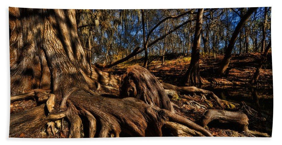 Tree Hand Towel featuring the photograph Tree Root by Wayne Kondoff