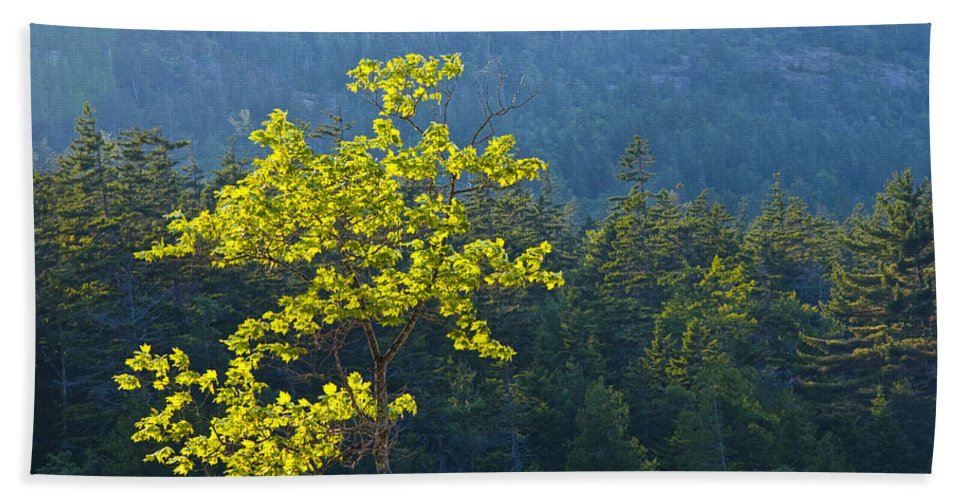Art Bath Sheet featuring the photograph Tree With Yellow Leaves In Acadia National Park by Randall Nyhof