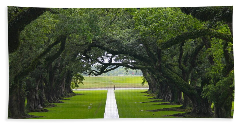Tree Bath Sheet featuring the photograph Trees At Oak Alley Plantation by Denise Mazzocco