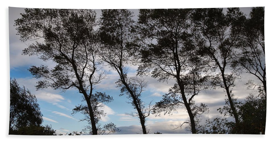 Nature Bath Sheet featuring the photograph Trees by Louise Heusinkveld