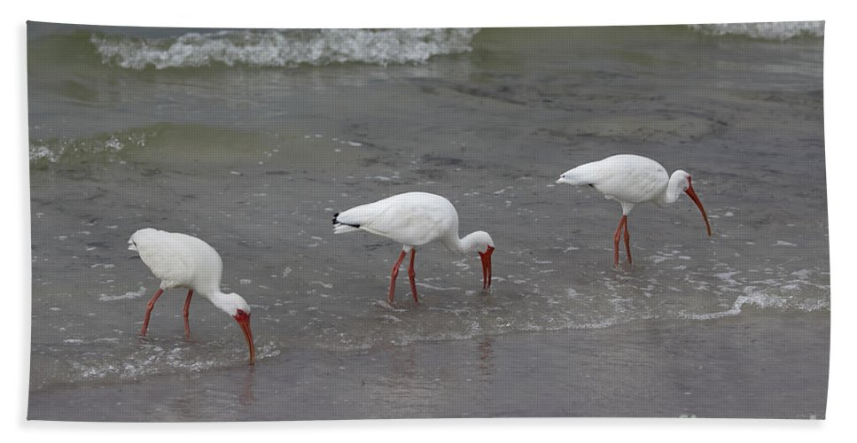 Egret Bath Sheet featuring the photograph Tres by Rick Kuperberg Sr