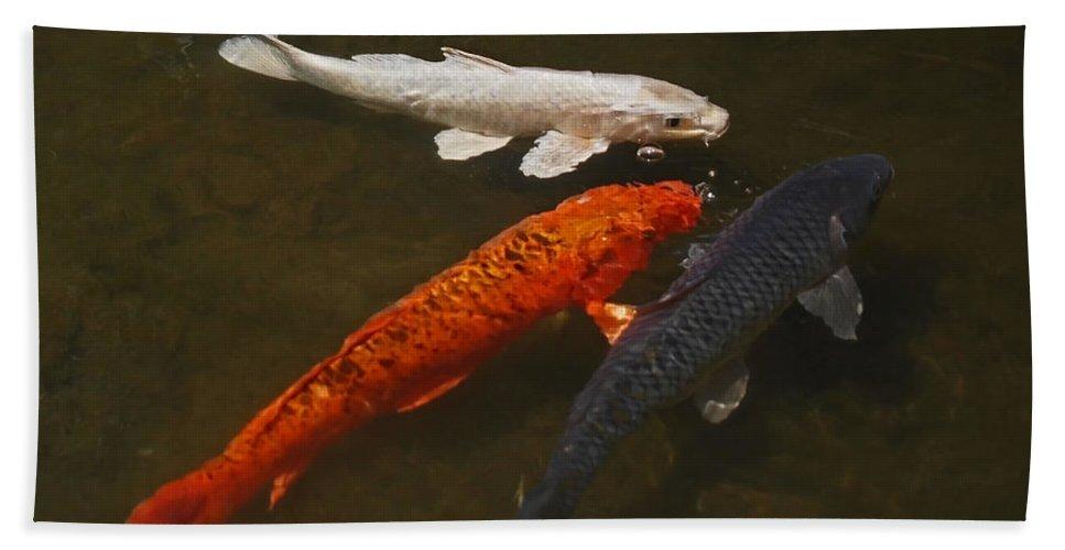Koi Bath Towel featuring the photograph Tri-colored Koi by Rona Black