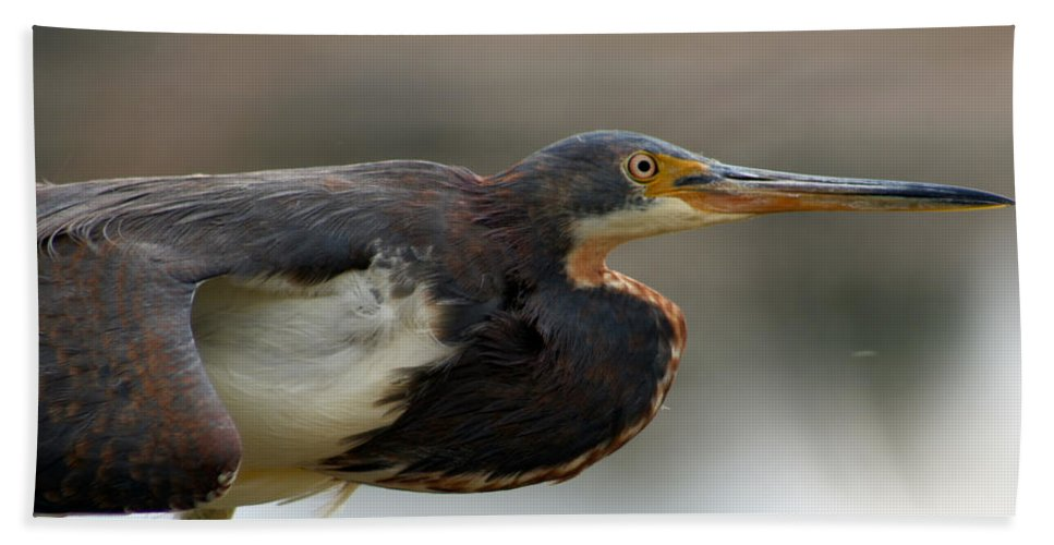 Tricolored Heron Hand Towel featuring the photograph Tricolored Heron 1 by Allan Lovell