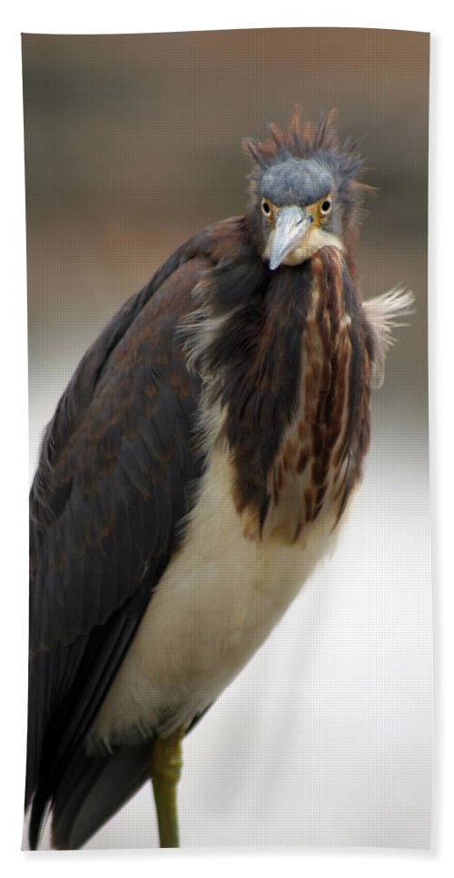 Tricolored Heron Hand Towel featuring the photograph Tricolored Heron 2 by Allan Lovell