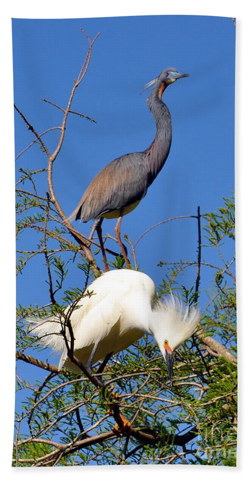 Tricolored Heron Bath Sheet featuring the photograph Tricolored Heron And Snowy Egret by Lydia Holly