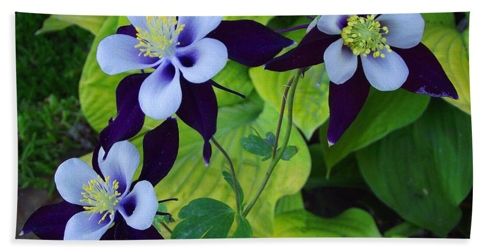 Purple Hand Towel featuring the photograph Triple Beauty by Mike and Sharon Mathews