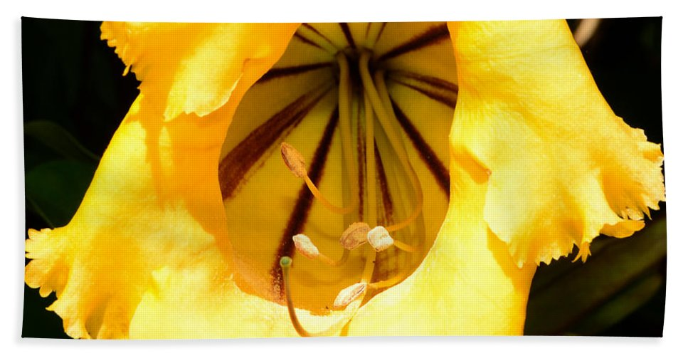Yellow Flower Bath Sheet featuring the photograph Tropical Yellow by David Lee Thompson