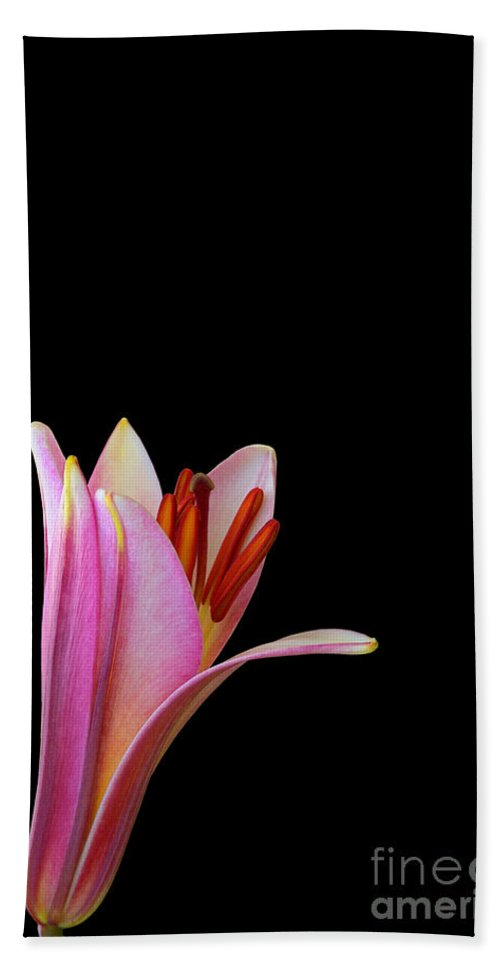 Trumpet Lily Hand Towel featuring the photograph Trumpet Lily by Judy Whitton