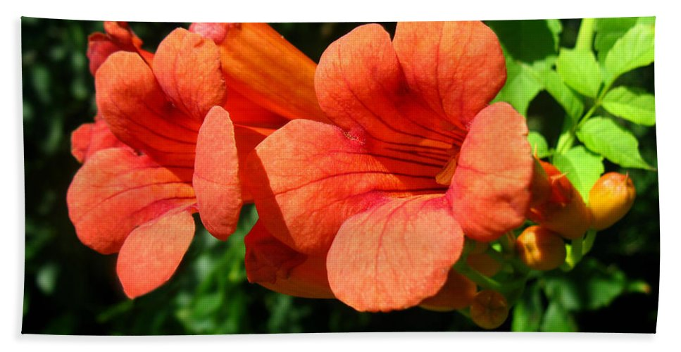 Campsis Radicans Hand Towel featuring the photograph Wild Trumpet Vine by William Tanneberger