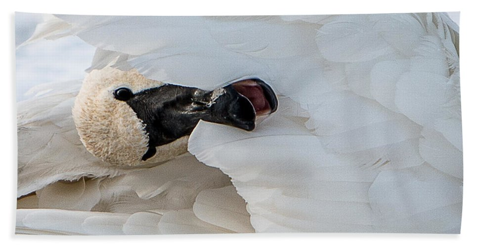 Swan Bath Sheet featuring the photograph Trumpeter Swan Peek-a-boo by Patti Deters